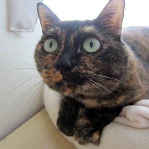 2階の住人(猫)