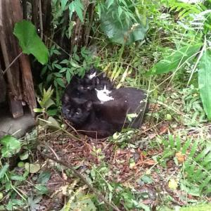 子猫が庭に来ました!