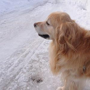 早く 老犬と、老人で車中泊キャンプに行きたいで~~~す。