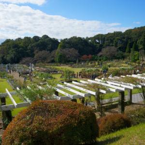 生田緑地のばら苑