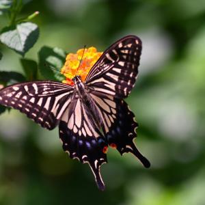 ワクチン2回目接種と蝶の楽園