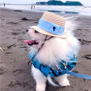 ☆ビーチを愉しむ…アン君♪