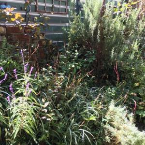今日の お庭