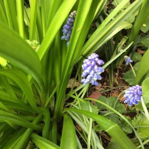 青いお花と 雨の景色