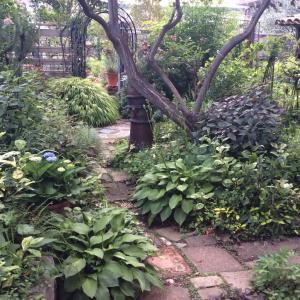 緑の お庭