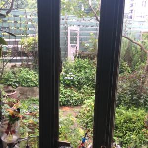 梅雨あけ前の お庭