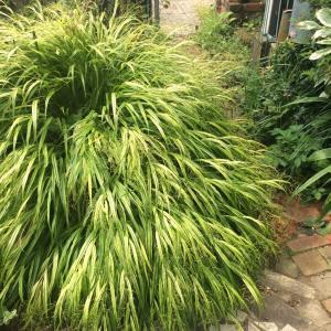 お庭の 植物