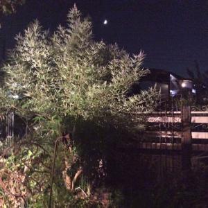 夜 のお庭