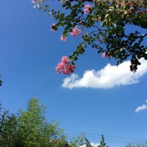 青空と 木と 雲と