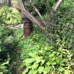 荒れ放題の お庭