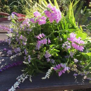 お庭の 草花