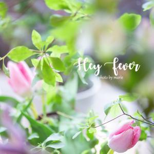 香港の穴場カフェ、花と日本人パティシエのケーキに癒され満たされる Cafe Hay Fever