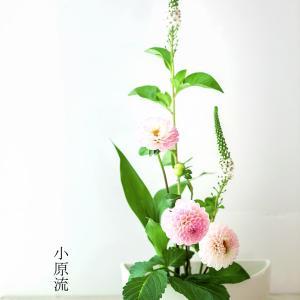 小原流いけ花を撮るレッスンをしました&日本未発売でニンマリなアップルサイダーでボケの練習も