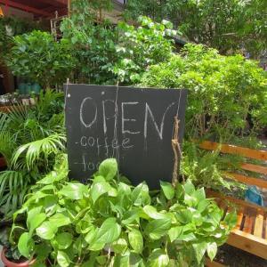 ヤンゴンで観葉植物を探してみました(#^.^#)