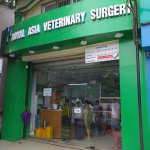 ヤンゴンの動物病院へ行ってきました…