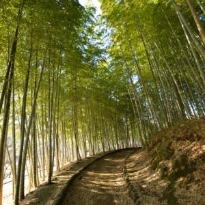 竹藪を見て思い出す小学低学年時の冬