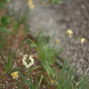 雨の中に輝く花