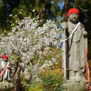 青空と桜、そして赤頭巾を求めて弘経寺へ
