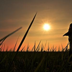 超猛暑日の夕景