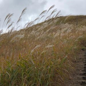 砥峰高原へススキを見に行きました