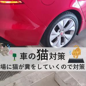 【車の猫対策】駐車場に猫が毎日来るので対策してみた