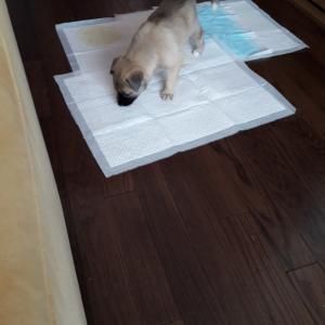 赤ちゃん犬子育て奮闘ケイクの巻2