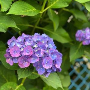 【イベント出店】7月6日(土)・7日(日)出店♪ハピスマ@松戸 事前予約、承っております!