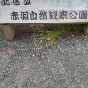 久しぶりの赤羽自然観察公園