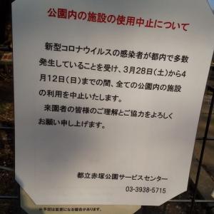 今日の赤塚公園~4月2日