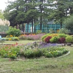 コキアが色づき始めました~赤塚公園