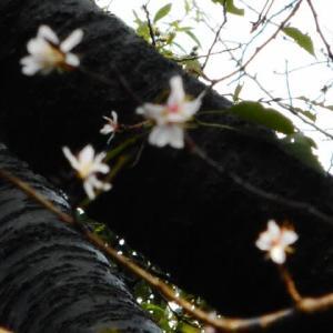 毎度おなじみの赤塚公園