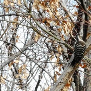 はじめましての鳥さん~赤塚公園など