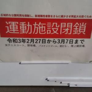 カンヒザクラのつぼみ~赤塚公園