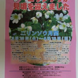ニリンソウ月間のポスター