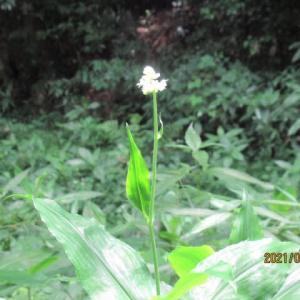 赤塚公園植物モニタリング活動~6月21日