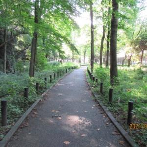 赤塚公園崖線の植物記録ノートを作ってみよう
