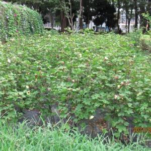 赤塚公園~赤塚植物園を散策