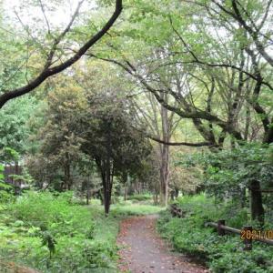 赤塚公園植物モニタリング活動~9月13日