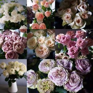 堀木園芸Rose ラインナップ
