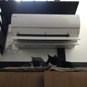 老猫の腎数値検査の結果