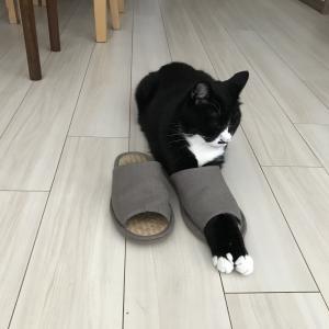 猫のトイレまわりの対策