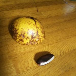 南米果実のアビウ 日本最北端栽培・・