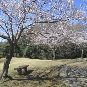 お気に入りの桜の「名所」
