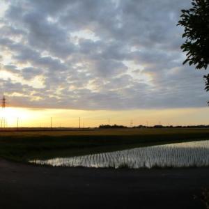 麦秋と朝焼け