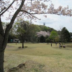 桜のある穴場の公園