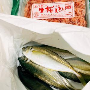 日本一の鯵 生桜海老〜☆