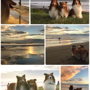 こむつむの夏旅 3日目① 大洗(おおあらい)海岸で朝んぽ 大盛り上がり