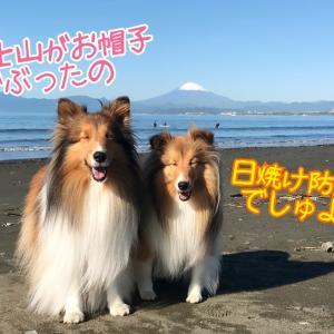 <季節のブッ込みニュース>富士山初冠雪!こむつむさんがお知らせ☆