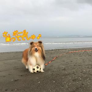 海遊びを禁じられたこむつむさんと 余談:こむつむさんのうん子さん
