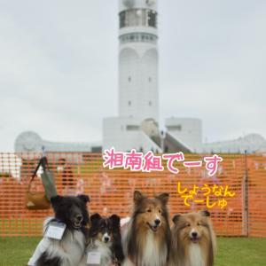 横浜シンボルタワー ドッグランキャラバンシェルティエリア 何年か越しの素敵な出会い♡シェルティの繋がりってスゴくない!?